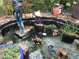 Full Pond Cleaning, Annual Pond Cleaning, Koi Pond, Goldfish Pond, Water Feature Cleaning, Drained Pond, Pond Care, Austin Texas, Wellness Through Water