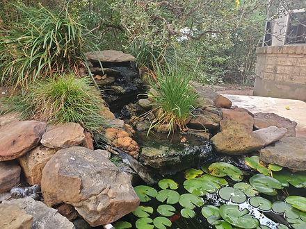 koi pond, before photo, pond before, koi pond construction, koi pond repair, pond filtration, pond rebuild, pond upgrade, austin texas