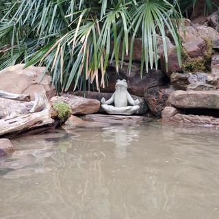Wellness Through Water