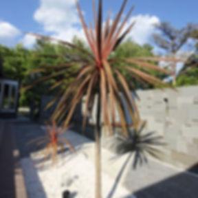 Cordyline australis.jpg