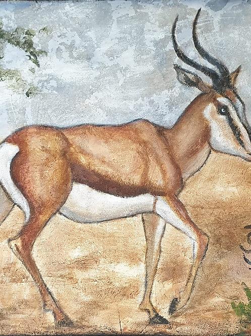 Springbok 2
