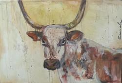 Nguni wall art Zindi
