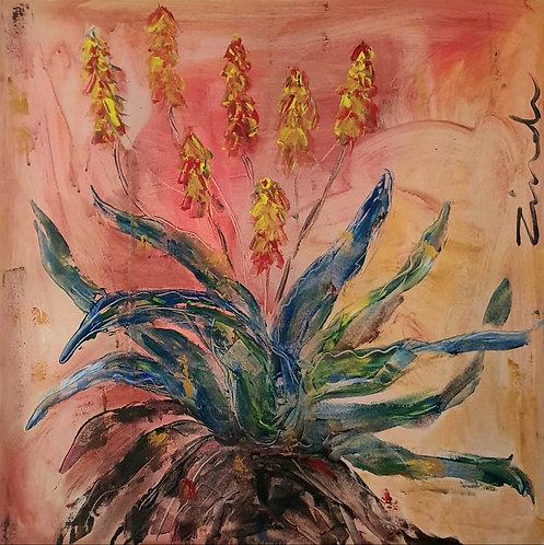 Large Aloe