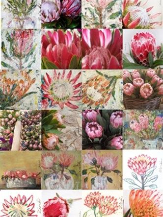 Protea card collection
