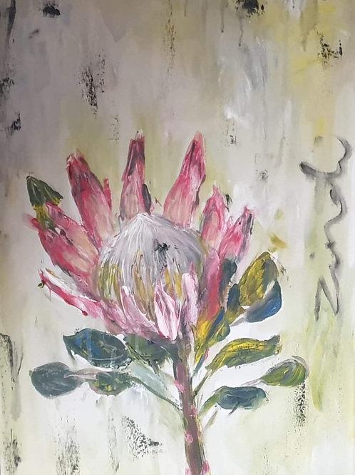 Proteaceae 2