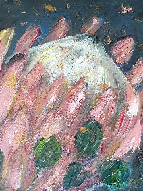 Protea on dark 1
