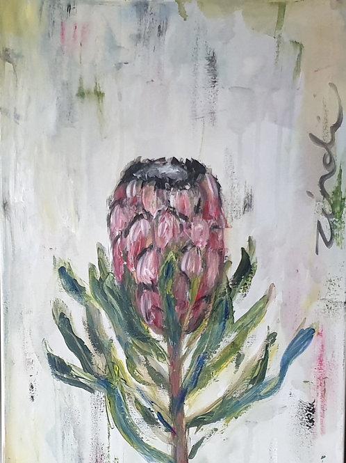 Proteaceae 1