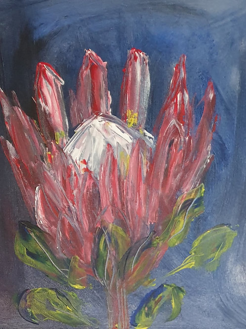 Pink Protea on blue 2