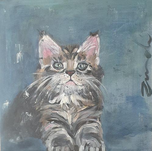 Kitten on blue