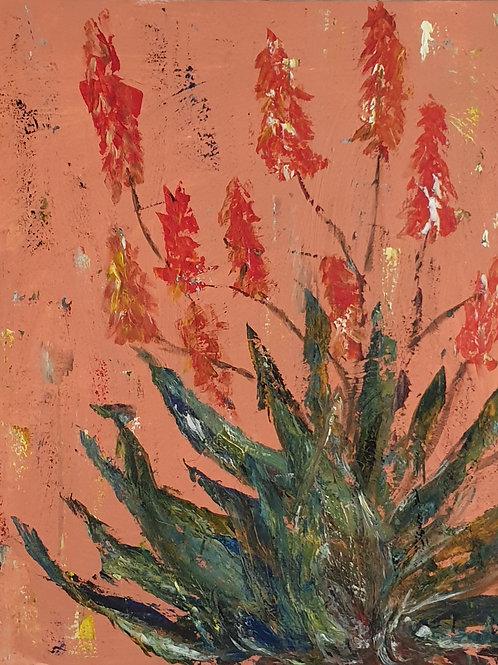 Aloes on Orange