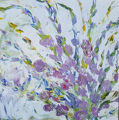 Purple sword lillies