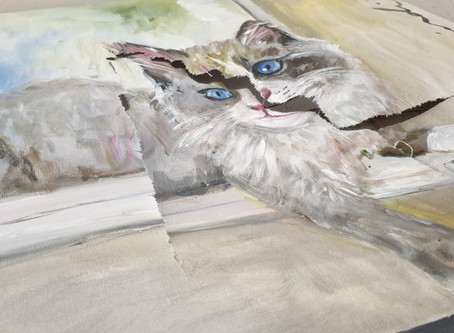 Blue eye cat painting in distress after lockdown rush