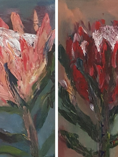 Red and Pink Proteas