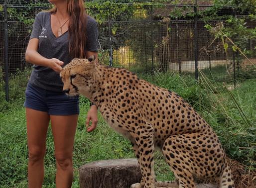 Cheetah's Rock- Zanzibar's Not So Little Hidden Gem