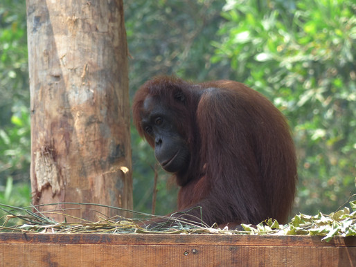 Borneo: 14 Fun Things To Do In The Sabah Region