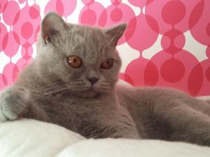 Kattungar & vuxen omplacering