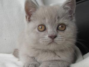 Kattungar, väntad kull