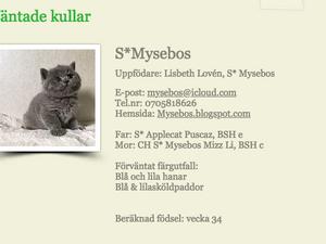 Kattungar väntas V.34 hos S*Mysebos