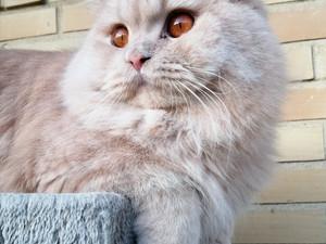 Ny titelbritt samt kattungar <3