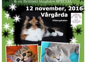 BREED BIS, Elsborgskatten 12 november, Vårgårda