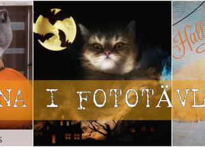 VINNARNA I FACEBOOK-tävlingen!