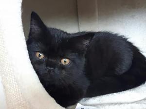 Kattunge söker nytt hem