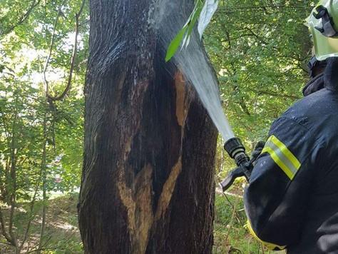 Schon wieder brannte ein Baum am Stephanring