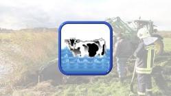 Tier in Notlage - Kuh im Wasser