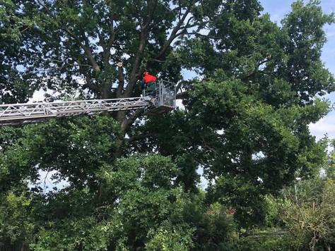 Langwierige Bergung eines Baumes