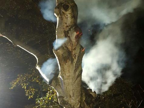 Äste qualmten wie ein Schornstein – Feuerwehr musste brennenden Baum fällen