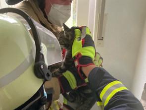 Katze aus stillgelegten Schornstein gerettet