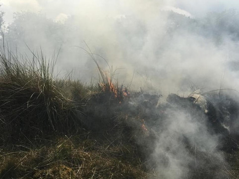 Dünenbrand auf Borkum