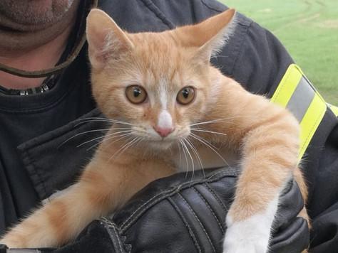 Feuerwehr rettet eingeklemmt Katze