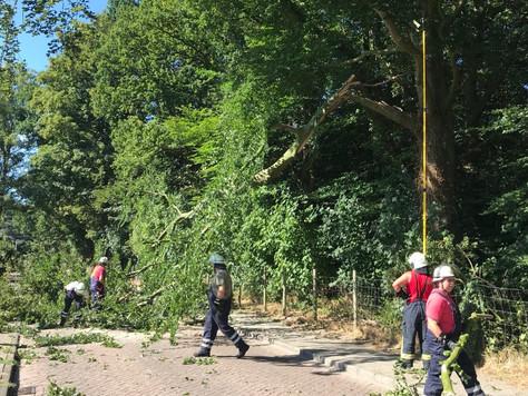 Großer Ast wegen Trockenheit aus Baum gebrochen