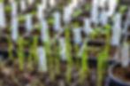 Planteringskurs Ljunggrens-1.jpg