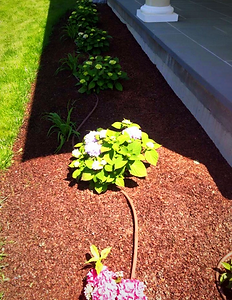 cape cod drip irrigation, irrigation on cape cod, cape cod irrigation, cape cod irrigation services