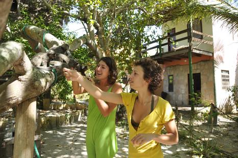 meet our friendly monkeys