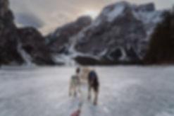 157+ Hundeschlitten 20190112.jpg