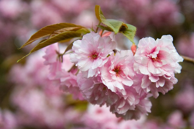 Sweet spring on startblog