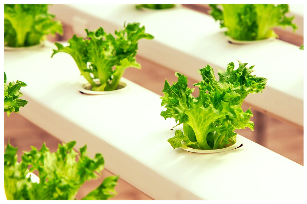 Hydroponics | Alternative for growing without Earth  on startblog