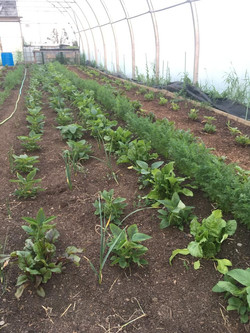 2020.05.26 Greenhouse