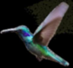 Hummingbird 2.png