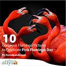10 Flamingos.jpg