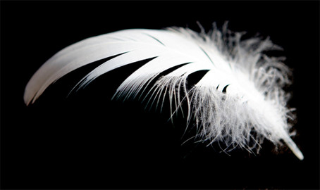 The White Feather Campaign