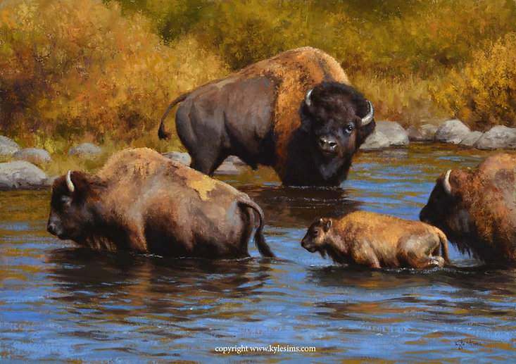 Original Oil Bison Painting