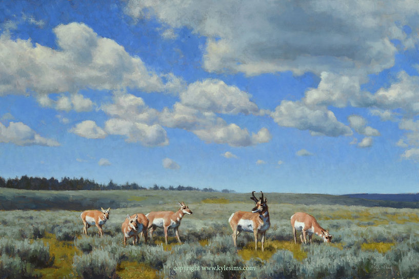 Original Pronghorn Oil Painting for sale