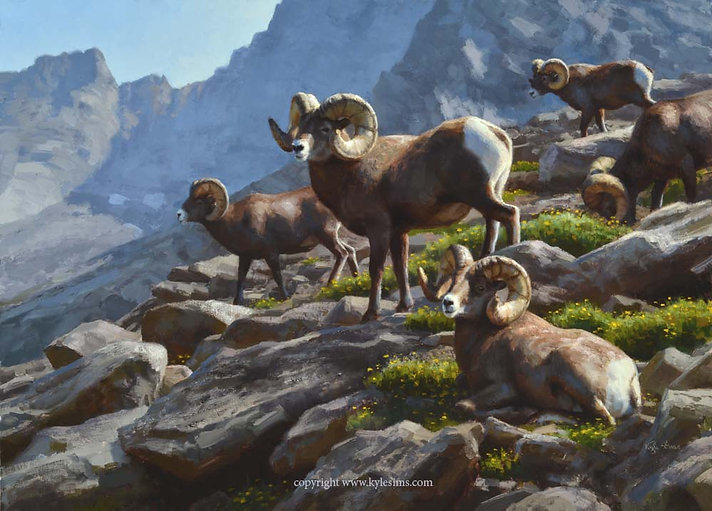 Original Bighorn Sheep Oil Painting for sale