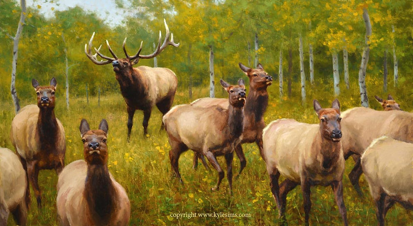 Original Rocky Mountain Elk Oil Painting for sale