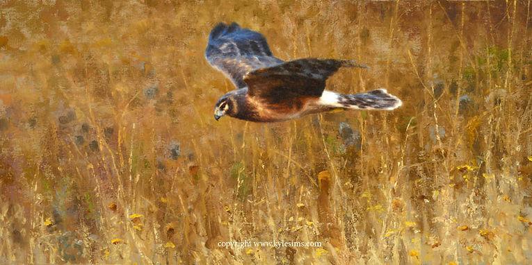 Original Buffalo Bill Art Show Bird Painting by Kyle Sims for sale