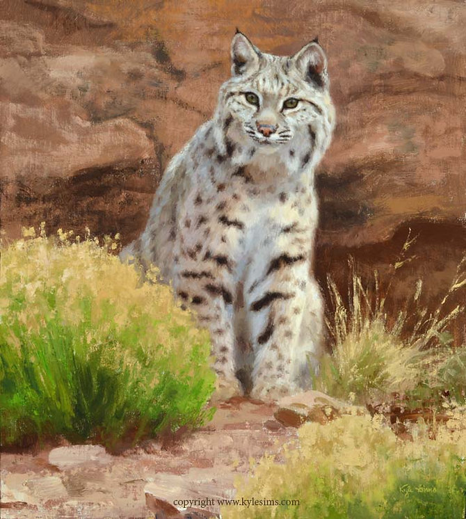 Original Bobcat Oil Painting for sale